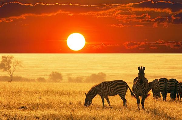 Africa calling!
